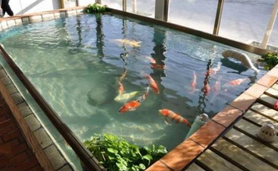 鱼池防水用什么防水材料好?
