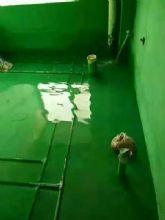 经典绿色防水涂料闭水试验效果图