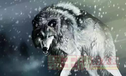 男人应该活出什么样?要像狼一样,充满血性!!