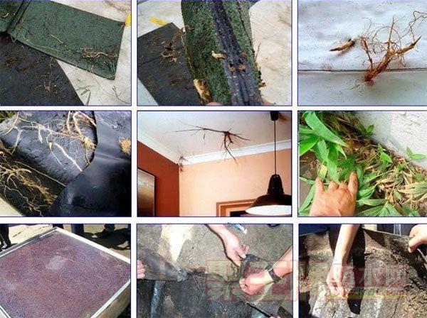 耐根穿刺防水卷材的施工要点分析