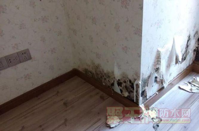 墙体发霉怎么办?做好防水,用墙固是关键