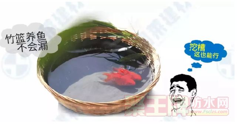 竹篮居然可以养鱼不漏水,亮吧!