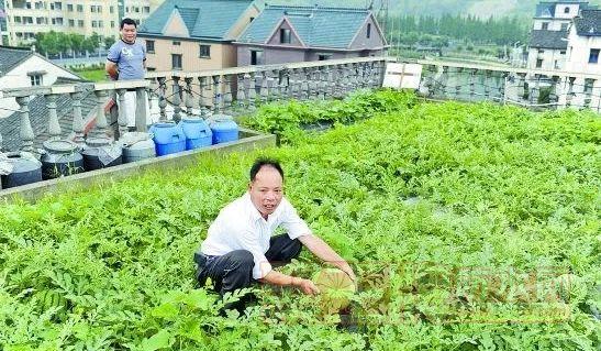 家里有地就有健康,旧屋面种菜如何做好防水?