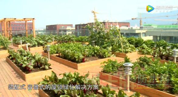 都市花园式菜园防水【匠心】中国防水匠 ——六安姜道城