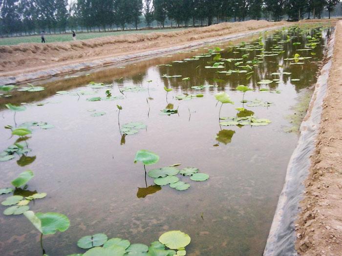 桂林鱼塘藕池防渗土工膜规格齐全